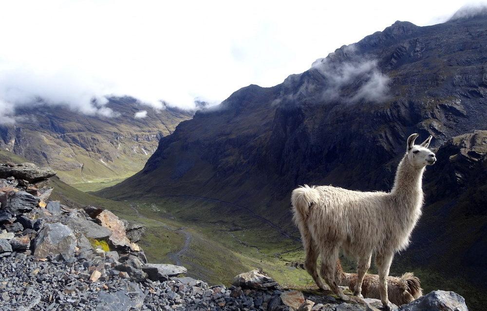 Bolívia leglátványosabb gyalogtúrái – az El Choro Inka ösvény
