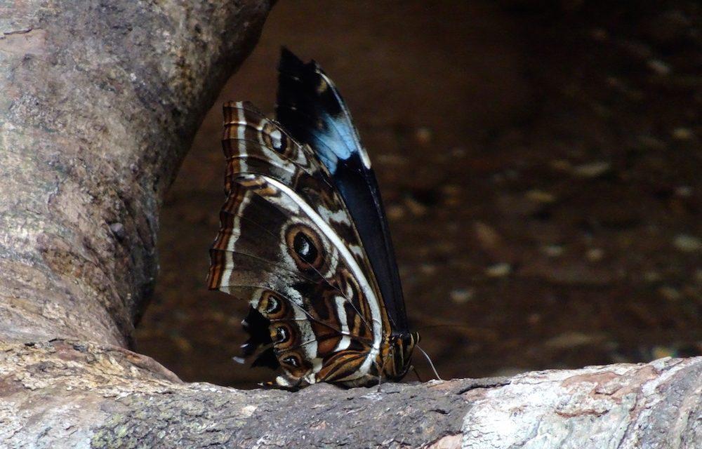 Tarapoto, a perui dzsungel kapuja