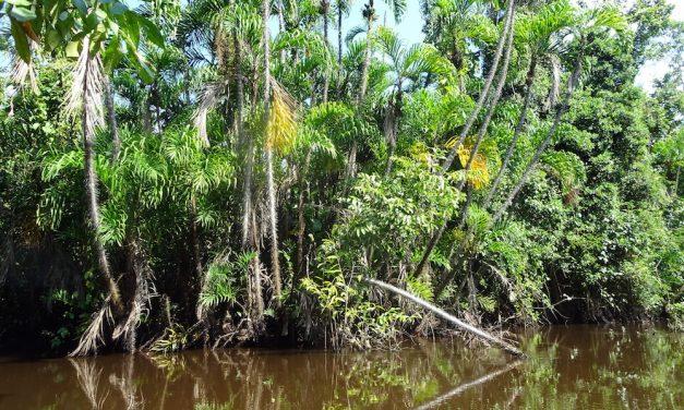 Pacaya Samiria, Perle des peruanischen Dschungels