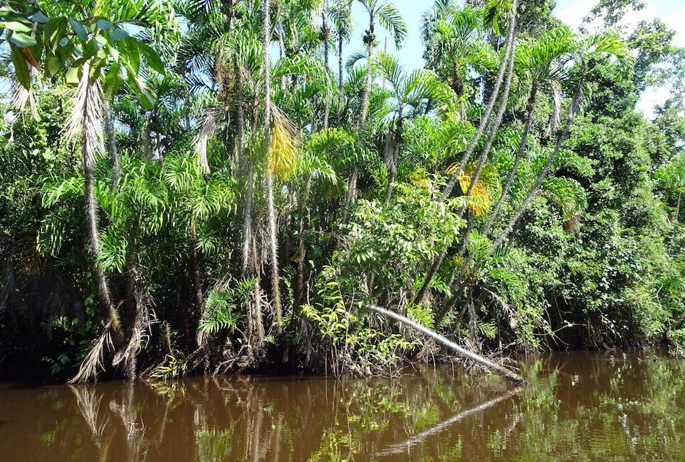 Pacaya Samiria, a perui Amazónia gyöngyszeme