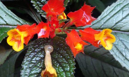 Moyobamba, die Stadt der Orchideen