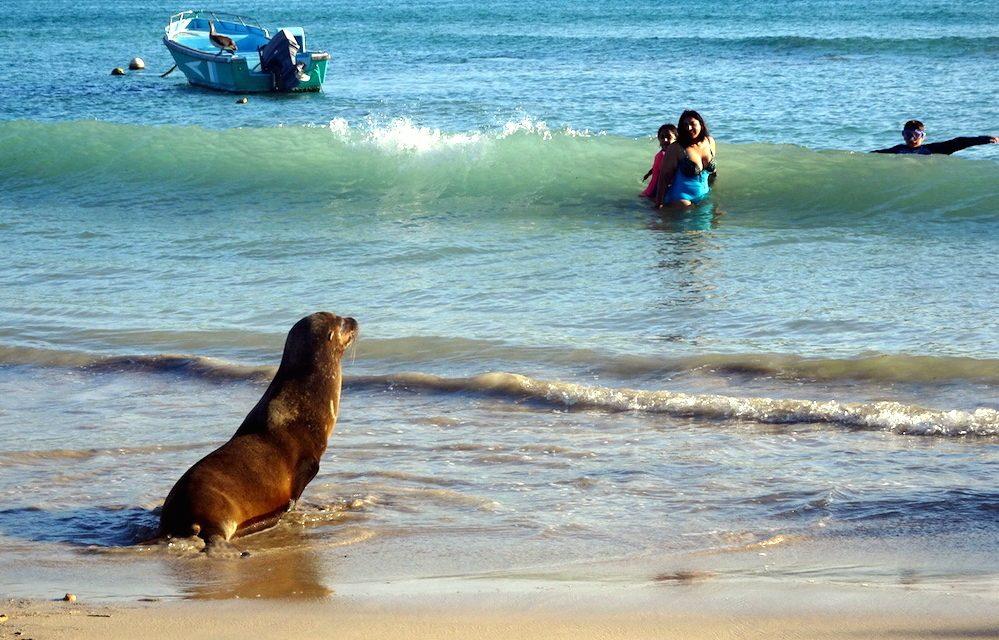 Galapagos, das letzte Paradies auf Erden (Insel Isabela)
