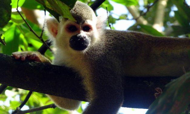 Hétvégi kirándulások Bogotából: Villavicencio és a Bioparque Los Ocarros (képes blog)