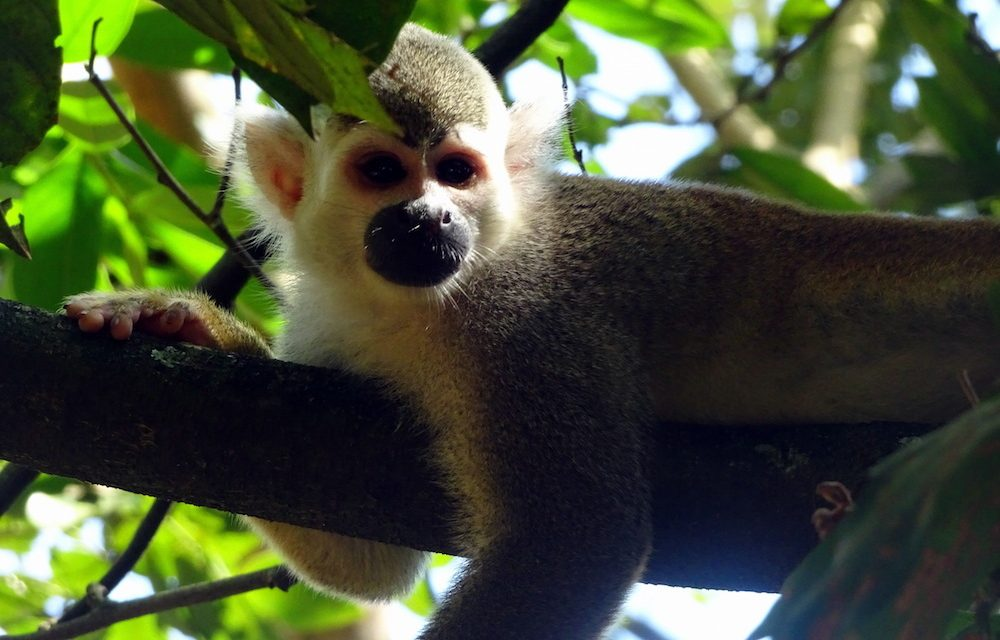 Wochenendausflüge aus Bogotá: Villavicencio und der Biopark Los Ocarros (Bildbericht)
