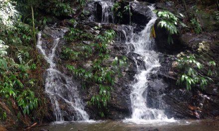 Minca: a Paso del Mango gyalogtúra
