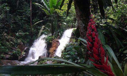 Per Frachtschiff über den Amazonas: Presidente Figueiredo (Bildbericht)