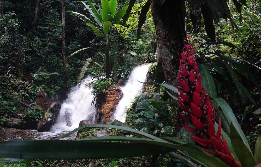 Teherhajóval Amazóniában: Presidente Figueiredo (képes blog)