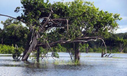 Per Frachtschiff über den Amazonas: die Nationalparks Jaú und Anavilhanas (Bildbericht)