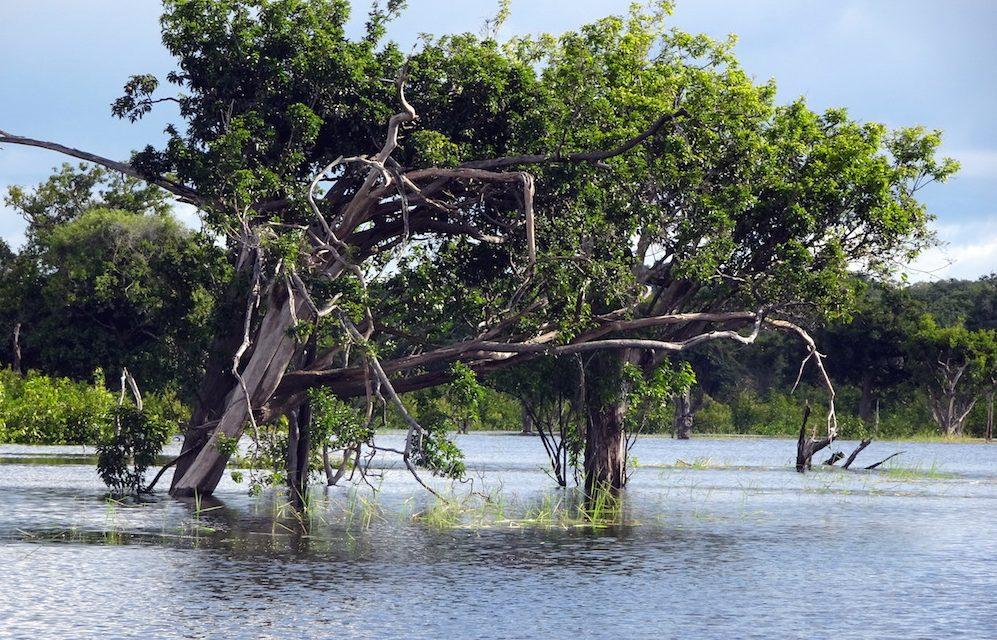 Teherhajóval Amazóniában: a Jaú és az Anavilhanas Nemzeti Park (képes blog)