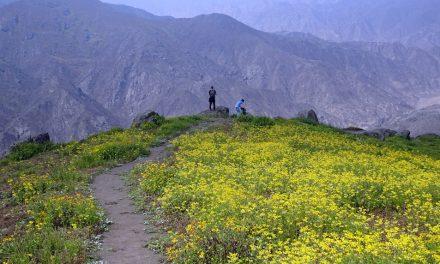 Lomas de Lachay: a sivatagi virágzás szépsége