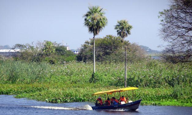Dél-Pantanal: Vadszafari Brazília elfelejtett mocsárvilágában