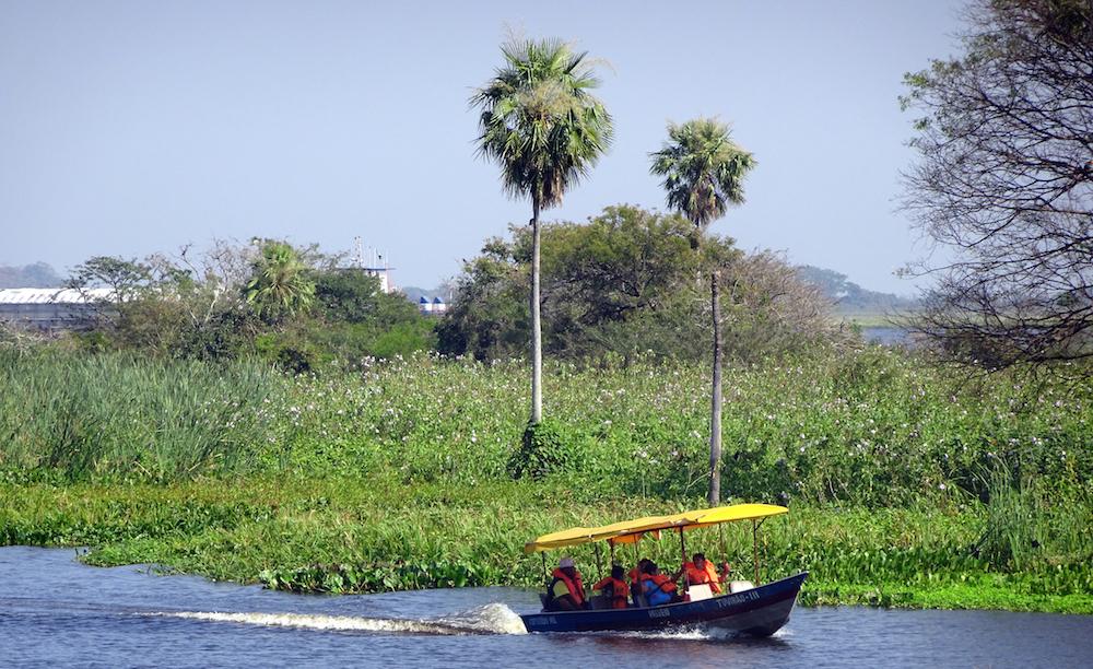 Süd-Pantanal: spektakuläre Tierbeobachtungen in der vergessenen Sumpfwelt Brasiliens