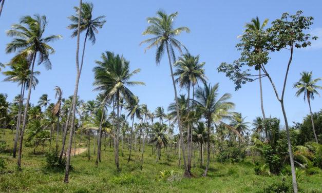 Durch Palmenwälder zu den ältesten Kirchen Brasiliens