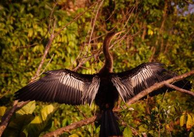 Tortuguero Nemzeti Park