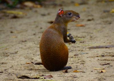 Cahuita Nemzeti Park
