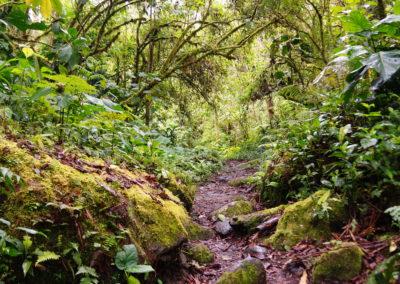 Quetzal-ösvény, Boquete