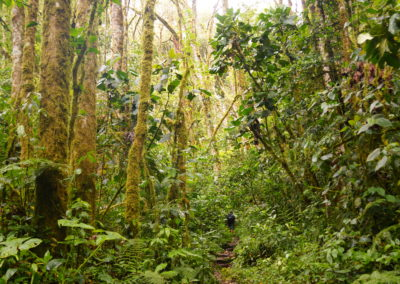 Quetzal Wanderung, Boquete
