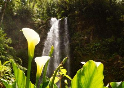 Lost waterfalls, Boquete