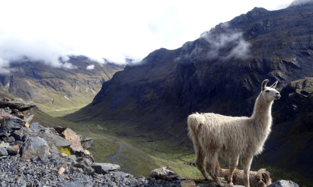 Bolivien's spektakulärste Wanderwege – der El Choro Inka-Trail