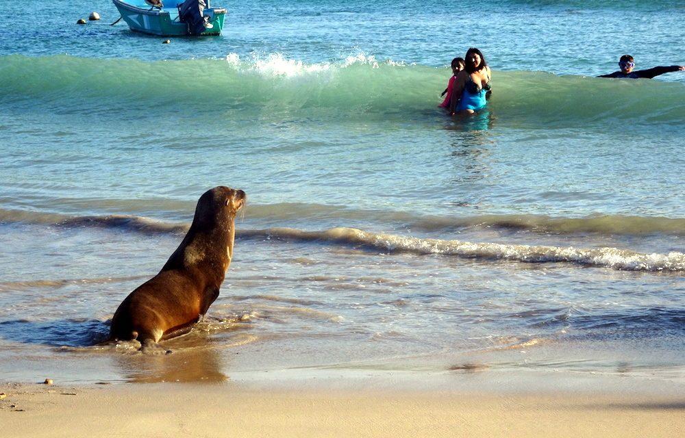 Galápagos, a Föld utolsó paradicsoma (Isabela-sziget)