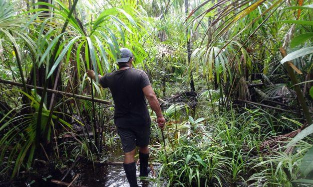 Im ecuadorianischen Dschungel: der Yasuní-Nationalpark