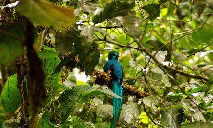 Boquete és a születésnapi quetzal